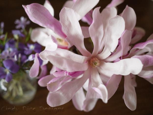 magnolia 114