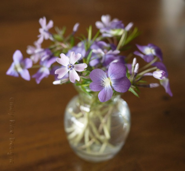 violets phlox100