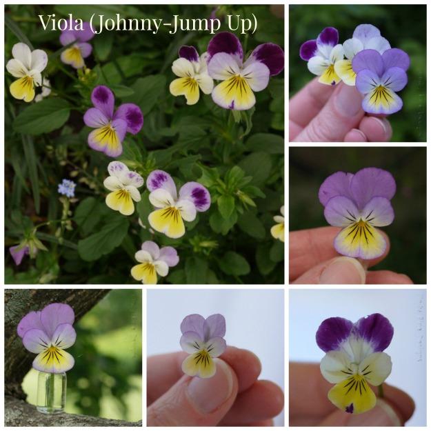 Viola wtitle Collage