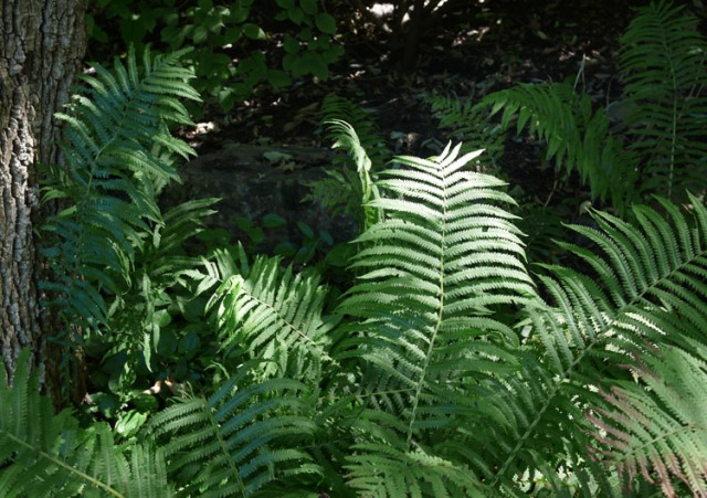 botanic gardens 052