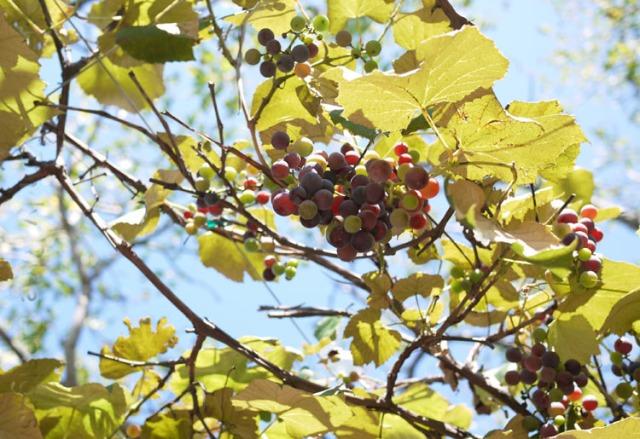 botanic gardens 134