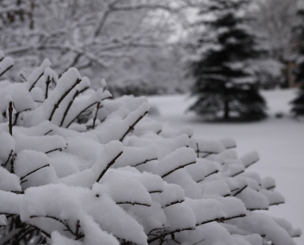 snowfall 266