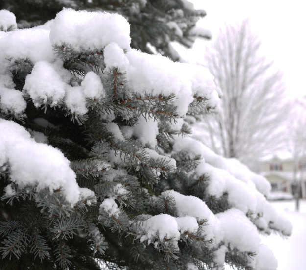 snowfall 271