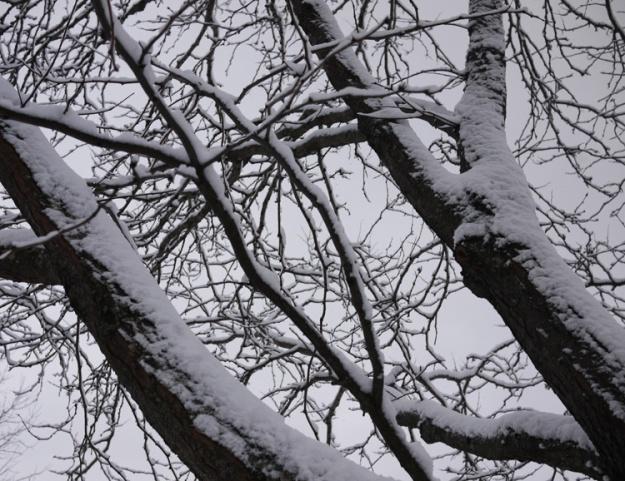 snowfall 275