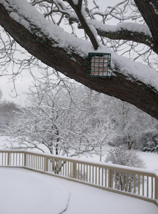 snowfall 276