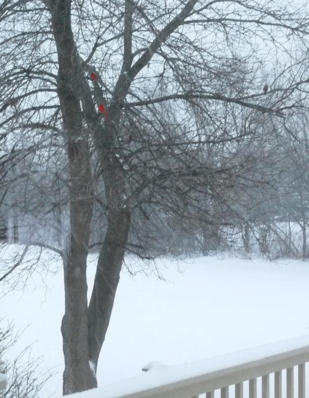 march snow 708
