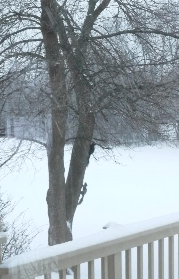 march snow 711