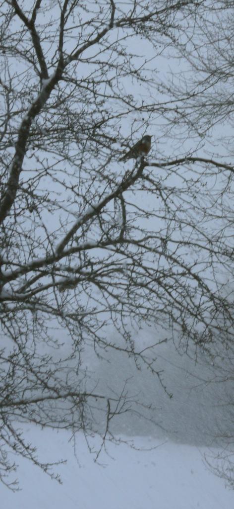 march snow 179