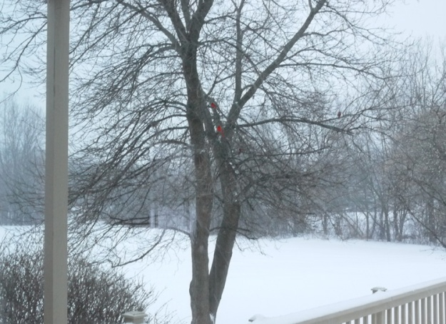 march snow b 708