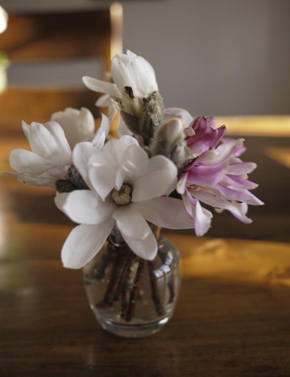 magnolia in vase 720