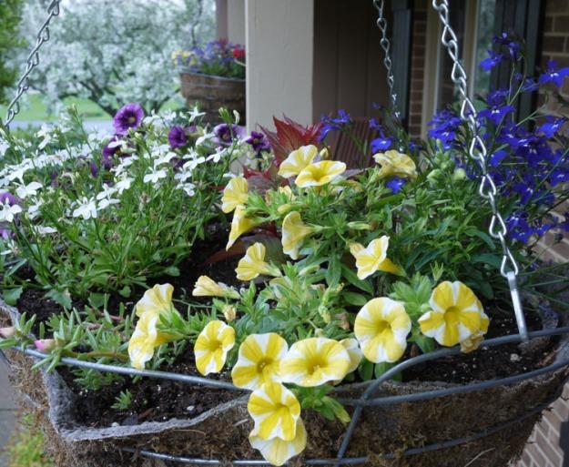 flower basket 367