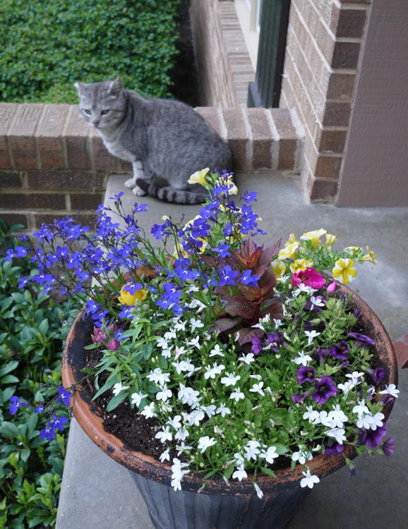 flower planter 350
