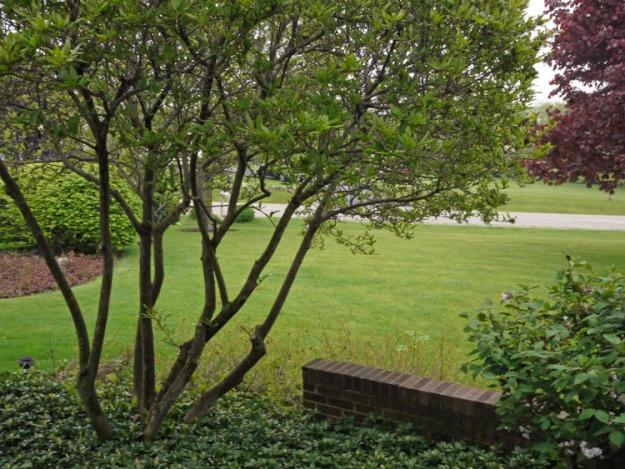 magnolia 378