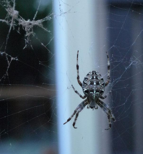 spider 080