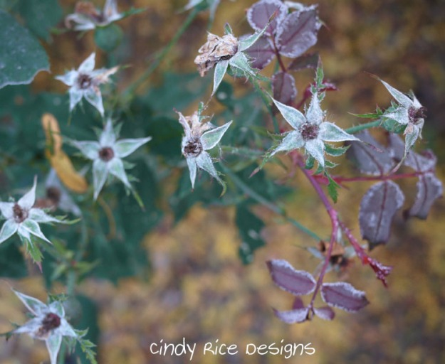 frost roses 728