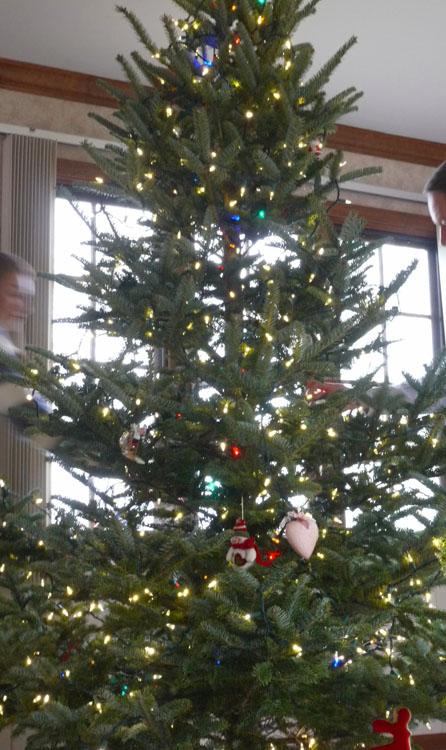 2015 tree 688