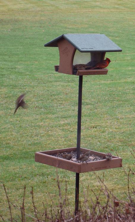 birds feeder 641