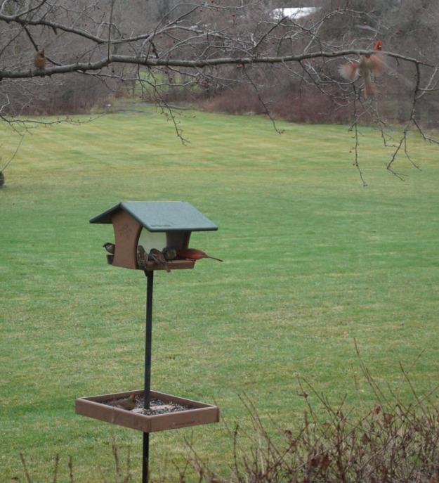 birds feeder 645