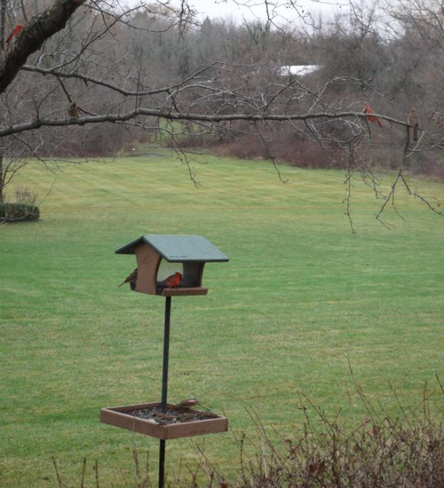 birds feeder 646