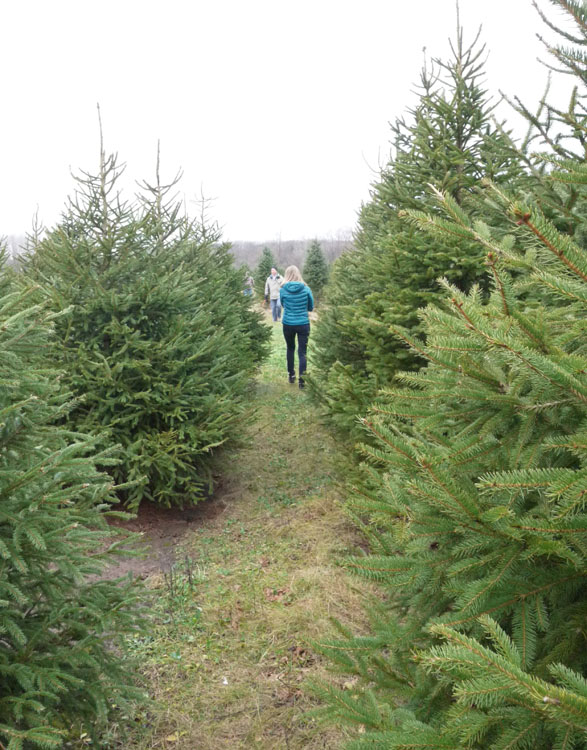 christmas tree farm 668