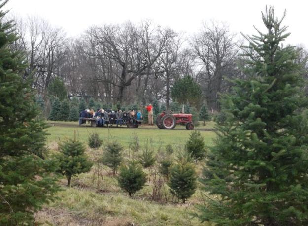 christmas tree farm 676
