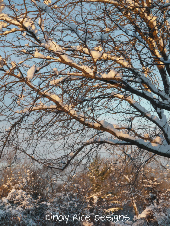 mid november cold 568