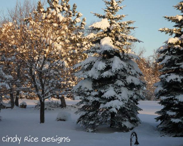 mid november cold 586