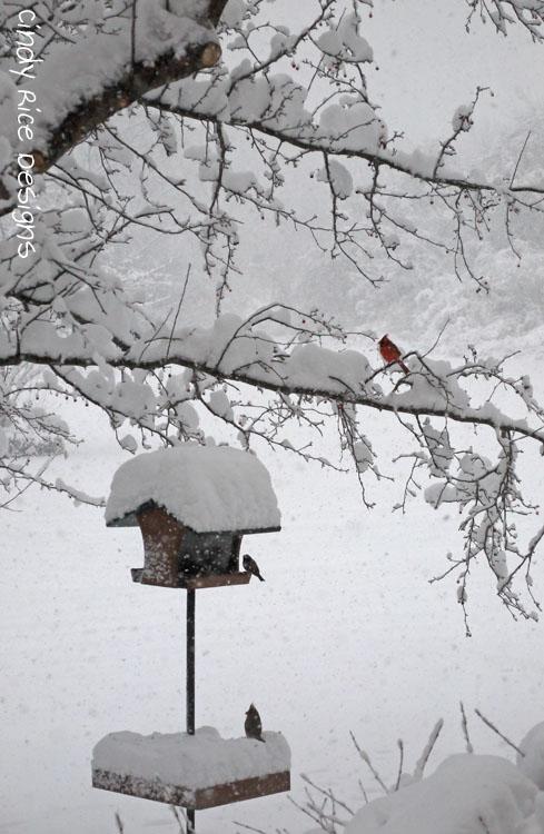 mid november snow 501