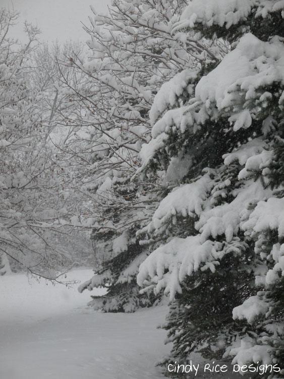 mid november snow 502