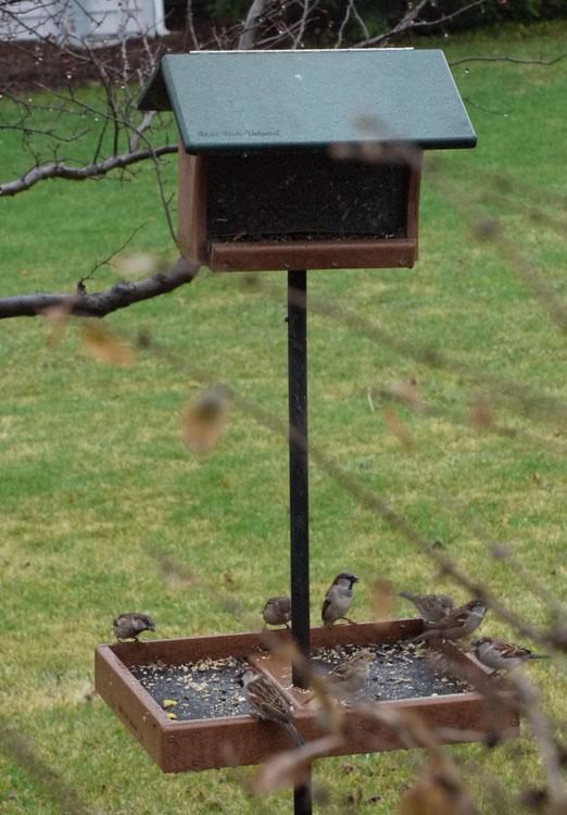 birds feeder 273