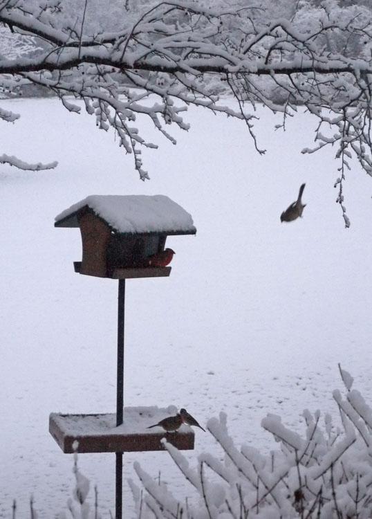 birds feeder 939