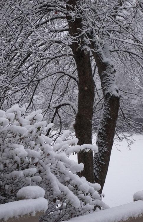 fall snow 953
