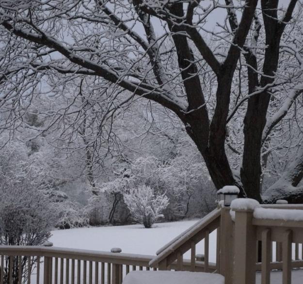 fall snow 954