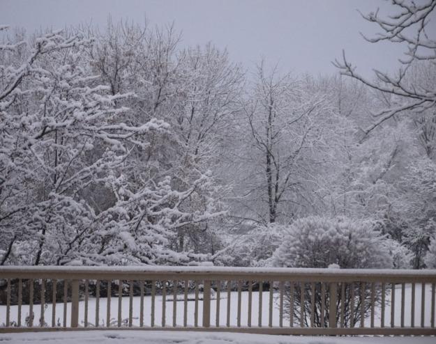fall snow 955