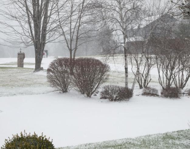 snow 720