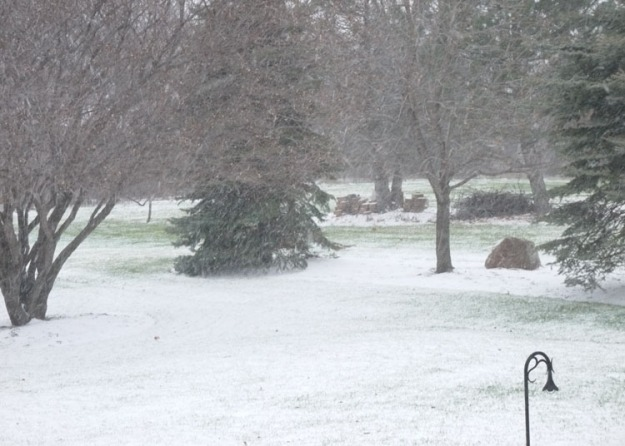 snow 723