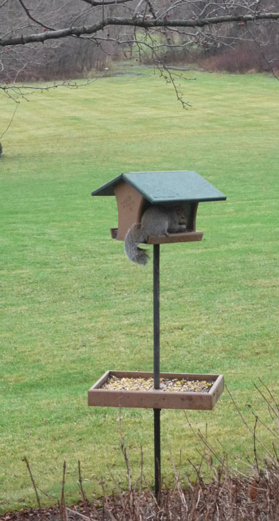 squirrel feeder 834