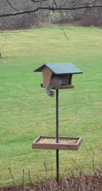 squirrel feeder 834