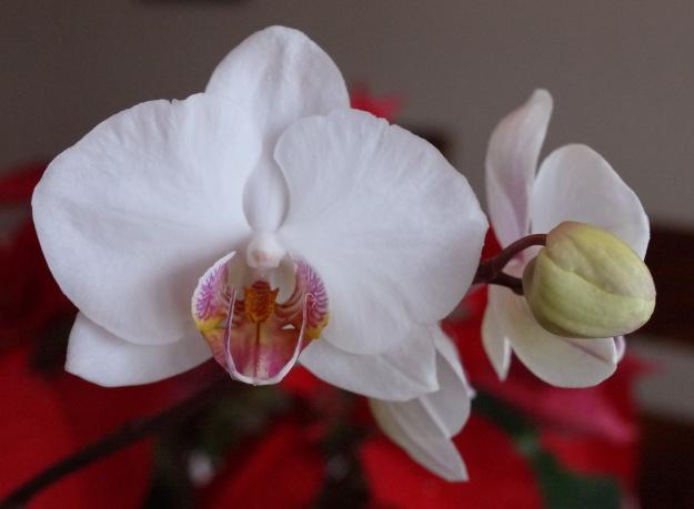 orchids 033