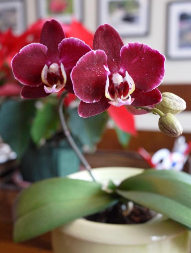 orchids032