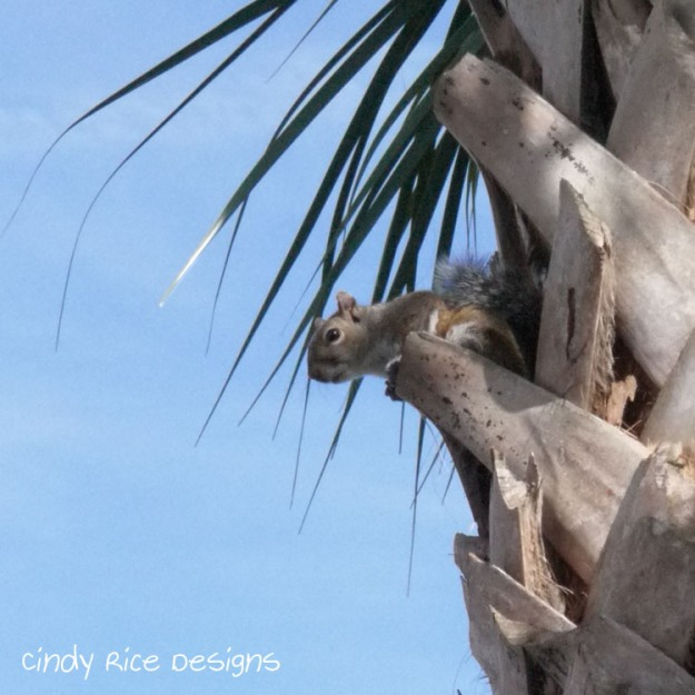 squirrel palm tree 447