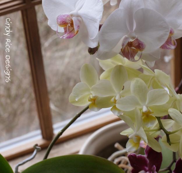 orchids 2016 215