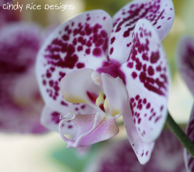 orchids 462