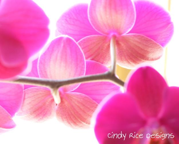 orchids 474