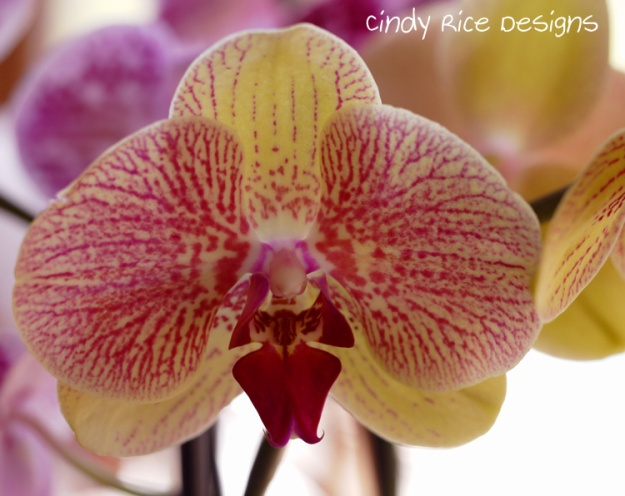 orchids 479