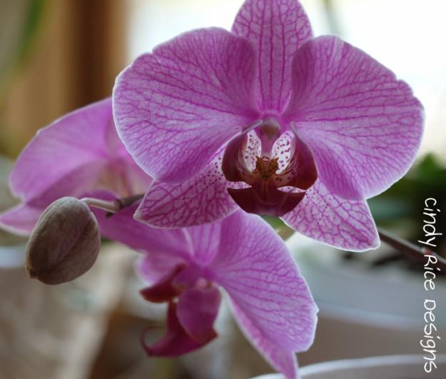 orchids 489