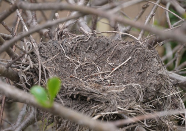 last year's robin nest 457