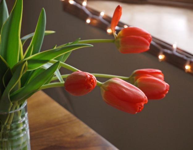tulips 475