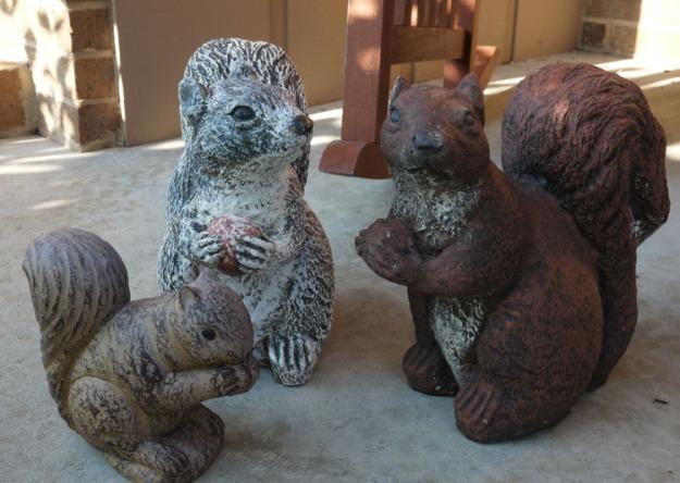 squirrels 923