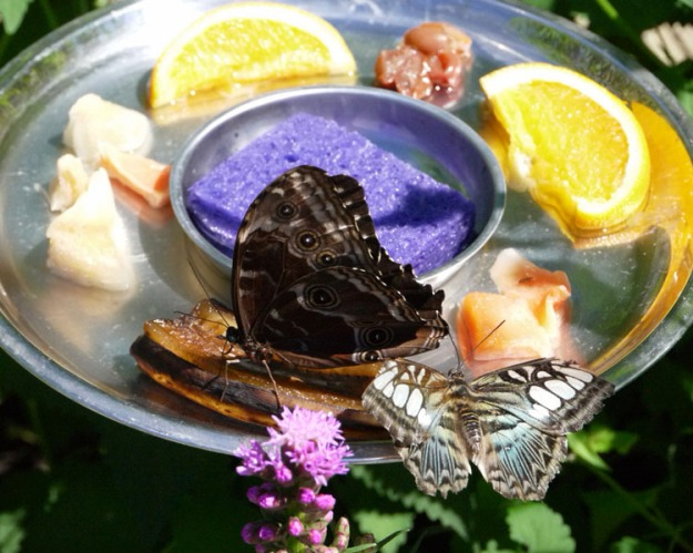 blooms butterflies 869